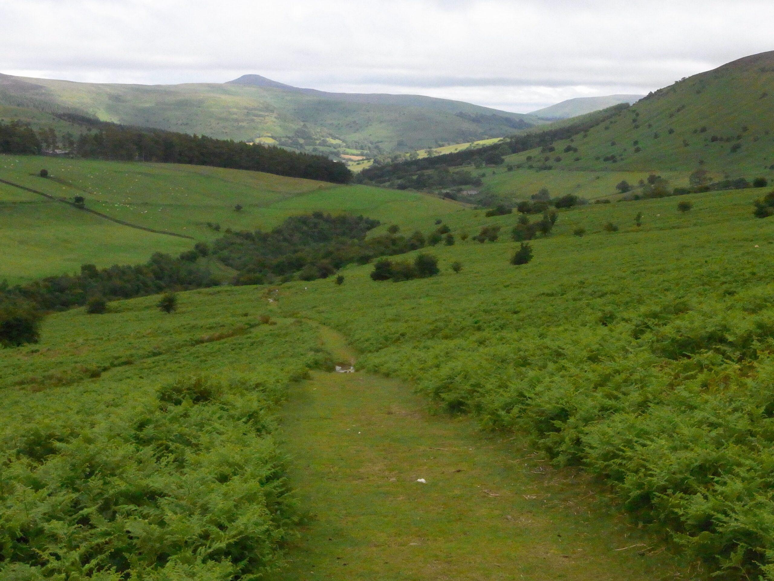 MacNamara's Road Black Mountains
