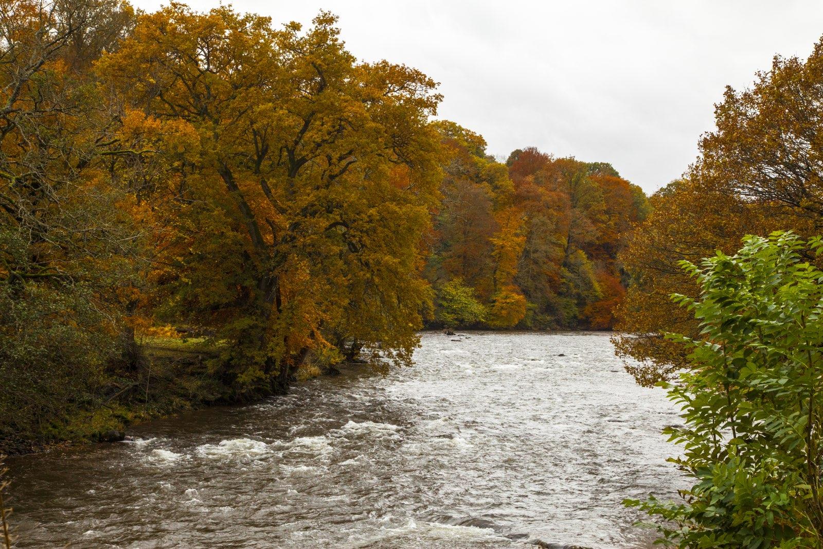 river usk at gliffaes hotel autumn colours