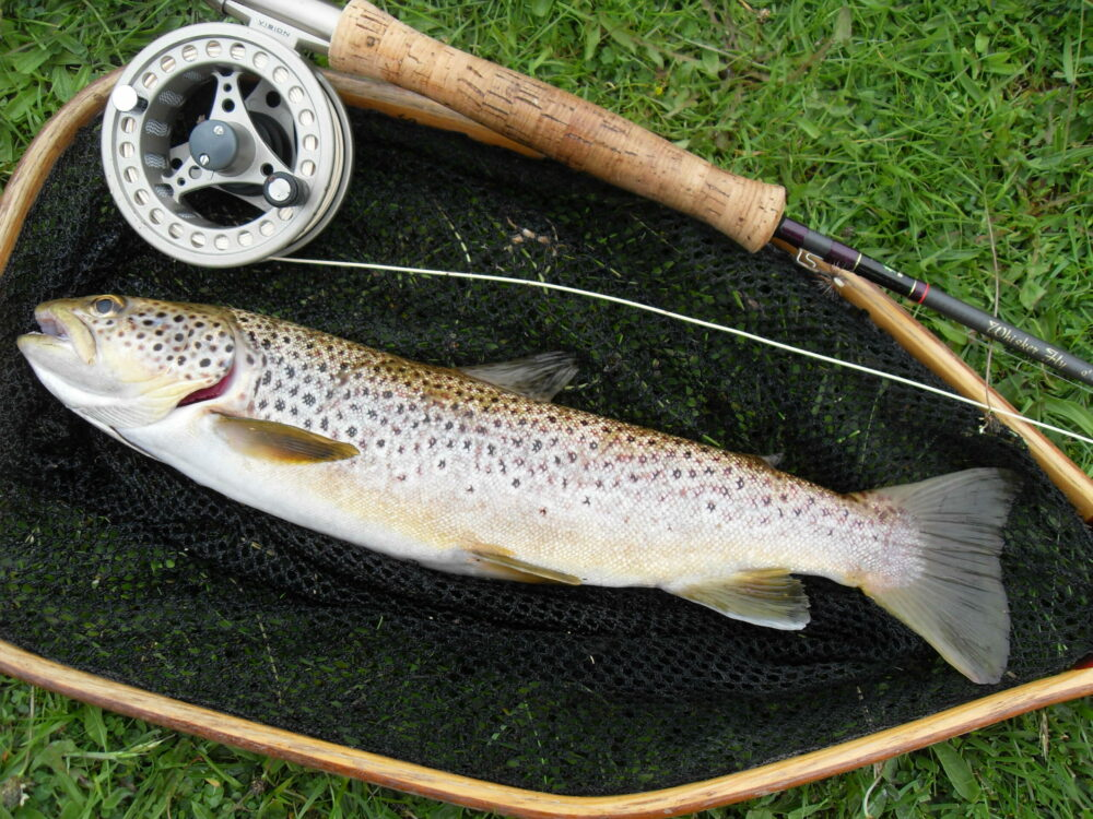 brown trout fishing on the usk
