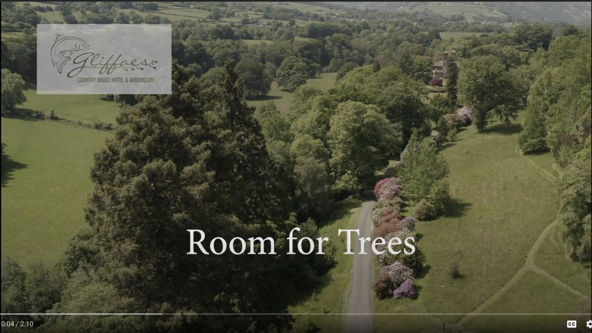 gliffaes hotel video about trees