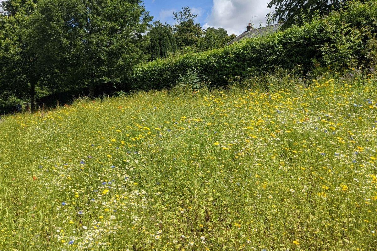 Aberglasney Gardens field golden