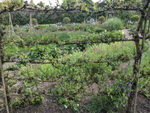 Aberglasney Gardens kitchen garden plant